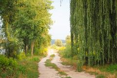 2013_edition_03_41 (Ilya Gulyaev) Tags: road travel trees green nature path ukraine