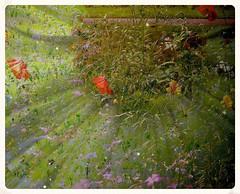 Atishoo ...HSS (Orchids love rainwater) Tags: flowers doubleexposure poppies wildflowers pollen sneeze hss sliderssunday