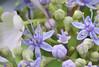 hyazinthen wie von einer anderen welt (elmar theurer) Tags: hyazinthen hyazinthe natur nature beauty schönheit blüte blossom blume blumen flower flowers plant plants pflanzen botanik biologie