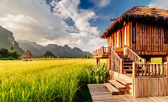 Vang Vieng Rice Field, Laos (syukaery) Tags: trip travel vacation house building green tourism nature field landscape hotel countryside wooden nikon scenery asia fuji rice paddy resort hut velvia d750 accommodation laos tamron karst vangvieng 1735mm vsco