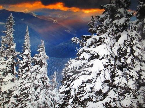 Les sapins tout en neige