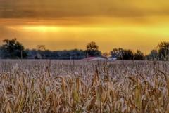 IMG_2742.JPG (Jamie Smed) Tags: autumn ohio sky usa sun fall silhouette rural sunrise geotagged october midwest skies farm sony alpha dslr a200 geotag browncounty app smalltown 2012 handyphoto iphoneedit snapseed jamiesmed