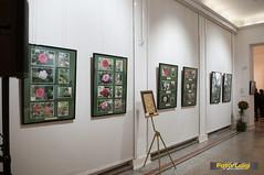 "Udruga ljubitelja kamelija, Izložba kamelija 2015, Dodjela nagrada • <a style=""font-size:0.8em;"" href=""http://www.flickr.com/photos/101598051@N08/16690526907/"" target=""_blank"">View on Flickr</a>"