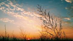 This was taken at about 4:45 am. (jontyshapiro) Tags: morning nature sunshine sunrise outdoors naturelovers