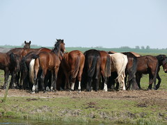 Paarden Horses (ellenanka) Tags: horses horse panasonic horsehead friesland fryslan paard paarden dmcfz50 noorderleech paardenhoofd