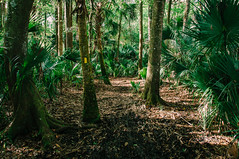 Bulow Creek (J. Parker Natural Florida Photographer) Tags: trees wild tree green nature forest woods nikon scenery warm florida hiking scenic trail jungle wilderness naturalbeauty floridastatepark wildflorida therealflorida vsco bulowcreek vscofilm