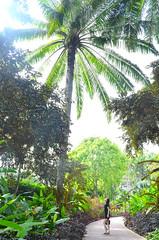 love nature (*tmk*) Tags: travel light flower green nature beautiful garden nikon singapore pastel botanic discover explor d5100