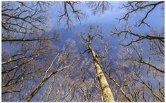 Forest, Loch Lomond (Gordon_Farquhar) Tags: park blue trees sky dog water sunshine tom clouds scotland spring glasgow national loch lomond balloch weir balmaha