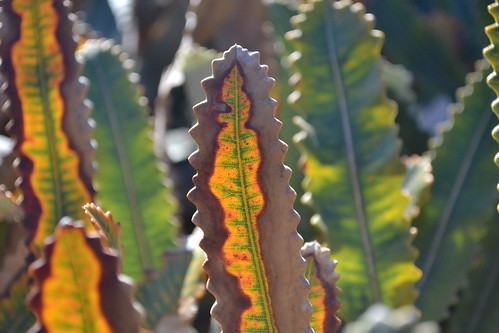 Some half dead leaves