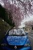 DSC06667 (macco☆) Tags: auto car japan cherry automobile blossom renault 桜 日本 sakura 車 さくら サクラ matra avantime 自動車 ルノー アヴァンタイム アバンタイムク ルマ