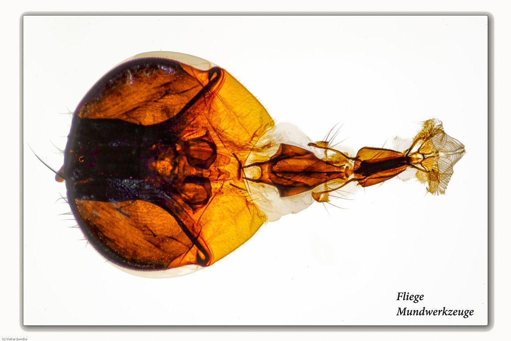 The World\'s Best Photos of mundwerkzeug - Flickr Hive Mind