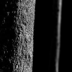Feierabendbuche (Knipsbildchenknipser) Tags: wood bw tree monochrome forest germany deutschland blackwhite spring balckandwhite sw schwarzweiss wald baum beech frhling buche karlstal trippstadt