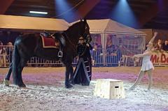 Salon du cheval de Hannut 2015 (NosChevaux.com) Tags: horses horse cheval pre chevaux paard paarden spectacle poney dressage frison quitation salonducheval hannut spectaclequestre