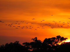 what a wonderful world (explore) (DOLCEVITALUX) Tags: sunset sky cloud bird beauty birds philippines explore bulacan glorious
