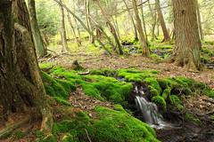 Hypsy Creek (3) (Nicholas_T) Tags: trees nature creek forest waterfall moss spring rocks stream hiking pennsylvania falls creativecommons poconos ravine monroecounty stategamelands38 stategameland38 sgl38 hypsycreek hypsygap