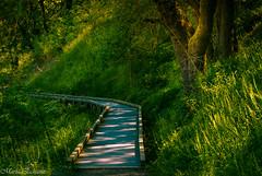 Urban hike (MacaPDX) Tags: trees light urban usa naturaleza nature portland landscape woods hiking path paisaje hike foliage trail urbannature pacificnorthwest pdx hiker pnw senderismo sendero urbanhike oaksbottomwildliferefuge