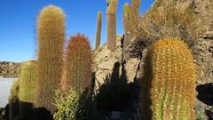 - 2016-05-06 at 22-49-06 + Cactus Island
