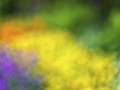 Blumenbeet (blichb) Tags: bayern deutschland natur pflanzen garten augsburg farben abstrakt defocus 2016 botanischergarten defokussiert blichb sonya7rii
