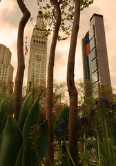 Time Between (mikebozinski) Tags: city flowers newyork architecture buildings iphone6
