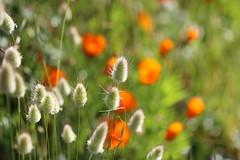 Bouquet champtre (Claire Avrin) Tags: