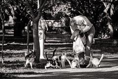 Cat 25 (`ARroWCoLT) Tags: park street old blackandwhite cats cat canon blackwhite feeding oldman istanbul elder stray tamron beyaz fenerbahce kadıköy siyahbeyaz siyah 700d 70300vc catstagram