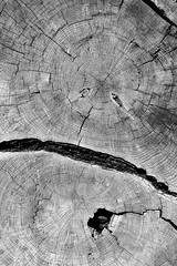 two grow old as one (DSM888) Tags: tree rings