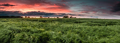 Green Sea - Panorama (flamelab.de) Tags: sunset red summer sky tree green field clouds germany landscape corn stuttgart wideangle scene simple panorame gnd ndreverse 84dot5mm