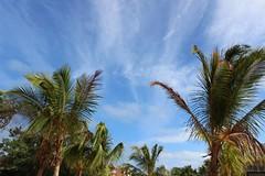 Cuba Sky (cori573) Tags: blue trees sky sun clouds cuba palm