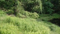 15 Minutes into 30 Seconds (Today's a good day for Adventure) Tags: abandoned weed whacking delawarewatergapnationalrecreationarea dwgnra