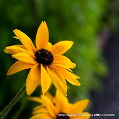 Flower #03 (osanpo) Tags: flower pen olympus ep5
