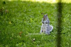 IMG_4617eFB (Kiwibrit - *Michelle*) Tags: tree grass birds woodpecker squirrel maine feeder chipmunk monmouth 2016 061916