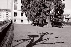 Shadow (Ursus Bear) Tags: shadow blackandwhite bw white black building film monochrome analog 35mm canon eos mono blackwhite outdoor monochromatic xp2 chrome shade 400 650 135 sequoia ilford ef f3545 3570 ilfordxp2400super