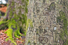 two (Birgit F) Tags: park norway lensbaby norge moss spring kristiansand vår selectivefocus mose vestagder ravnedalen edge80