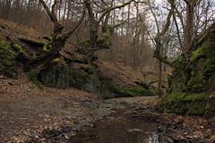 Az erdő mélyén / Deep in the Forest (bencze82) Tags: color forest voigtlander deep az sl ii f mm 20 35 voigtländer skopar f35 colorskopar erdő szentkút slii mátraverebély mélyén