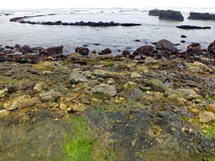 Plunging syncline in Purisima formation (tidepoolfan) Tags: tidepools californiacoast fitzgeraldmarinereserve friendsoffitzgeraldmarinereserve