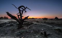 Hazy surise on a cold early spring morning. (Rijko) Tags: mist sunrise landscape dawn landscapes haze nederland friesland landschap earlyspring elsloo foggymorning morningglow zonsopkomst aekingerzand morgenrood drentsfriesewold vroegelente mistigeochtend