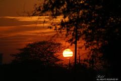 IMG_5040 (Rakib-) Tags: trees sunset weather photography was perfect shot outdoor good great happiness hours dhaka bangladesh orrange feels