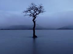 The sun ain't gonna shine anymore (kenny barker) Tags: blue tree scotland lochlomond lonetree millarochybay kennybarker