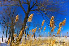 Ciel bleu du printemps / Blue sky of spring (Siolas Photography) Tags: sky sun nature québec fujifilm contrecoeur xe2 mpdquebec francequébec