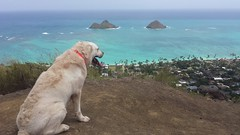 Kona and the Mokes (XJCreations) Tags: hawaii oahu lanikai bunkers kaiwa xjcreations