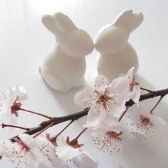 (3OPAHA) Tags: spring blossom springtime frühling