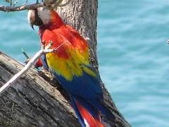 hula hoop sat 077 (Learn, Love, Conserve) Tags: hulahoop saprissa puntaleona feriaverdearanjuez
