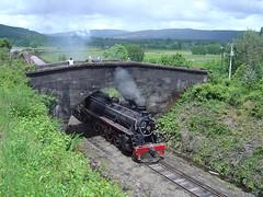 Tren de la Araucania