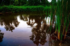 Oil spills never look this pretty (accidentaladolescent) Tags: park sunset reflection nature water pond lowlight greenery nikond7100