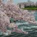 「春の喜び」 嵐山公園 - 京都
