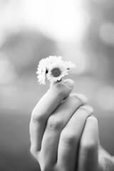 (Petar Stoykov) Tags: park sunset summer portrait sun flower netherlands girl face sunshine closeup 35mm canon landscape eos rotterdam girlfriend photoshoot emotion bokeh wideangle portraiture canondslr kralingen primelens 35mm14 canon1dmarkiii canon35mm14 canon1dmark3