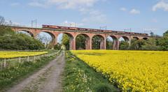 Shed Seven (Blaydon52C) Tags: blue yellow train durham transport shed rail railway loco trains wear locomotive railways locomotion locomotives eastcoast dbs countydurham mainline class66 ews ecml croxdale 66059 66050 66080 66110 66170 66207 dbschenker 66014
