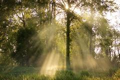Hallowed Ground (chris.ph) Tags: morning light tree spring sunrays fortlangley