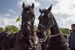 2016-Ameland015 (Trudy Lamers) Tags: wadden ameland eiland paarden reddingsboot reddingsactie
