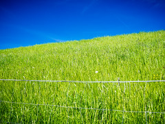 Eingezunte Natur (Frank Lindecke) Tags: natur wiese himmel grn blau zaun